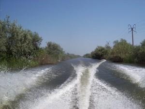 Siaj - Foto Simona - Delta Dunării august 2015