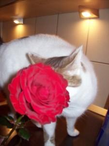 Meme trandafir 3