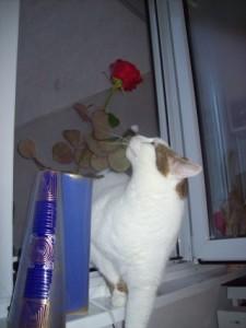 Meme trandafir 4